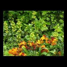 Naturnah Planen Gartenblick